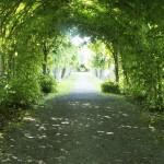 haie-arbre-tunnel
